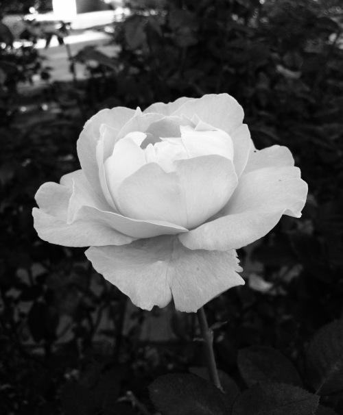 Garden_Noir